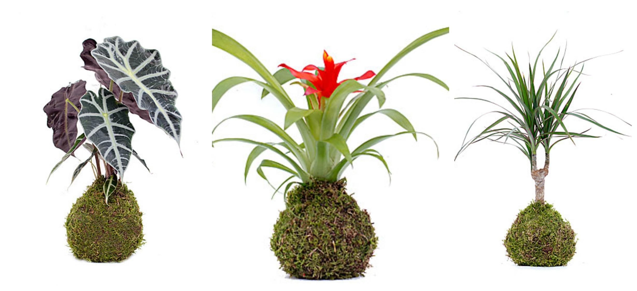 Taller sobre plantas de interior en mugi 2demayobilbao - Plantas de interior tipos ...